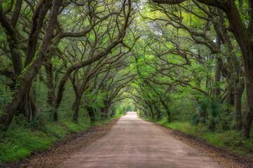 Botany Bay Road in South Carolina