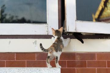 gray and white kitten climbing on the  white window