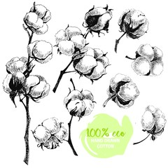 Vector hand drawn set of cotton branches. 100 eco. Cotton flower buds in vintage engraved style.