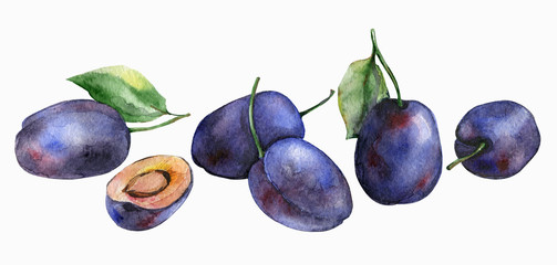 Watercolor plums isolated on white background