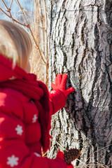 Little girl touching tree bark