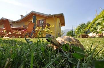 Tartaruga nel giardino