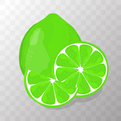 Lime isolated vector illustration