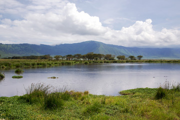 Beauty of nature near Lake Manyara with hippos in valley of Ngorongoro Crater Conservation Area, Tanzania. East Africa