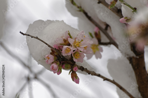 Fleur Sous La Neige Stock Photo And Royalty Free Images On Fotolia
