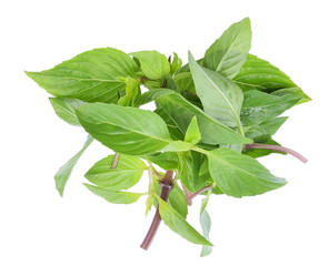 Pile of Sweet Basil or Thai basil isolated on white background