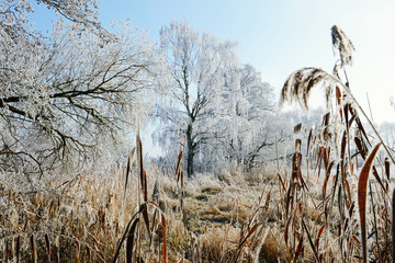 rime frost landscape at Havel river (Brandenburg - Germany)