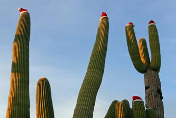 Saguaro-Kaktus mit Weihnachtsmuetze