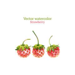 Watercolor vector strawberry
