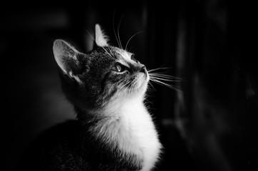 beautiful cat portrait monochrome