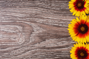 Yellow flowers lie on the wooden background. Space for text and design.
