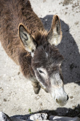 donkey behind his fence