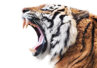 Photo sur Aluminium Tigre Tiger fury