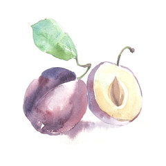 Fruits in watercolor style. Isolated.