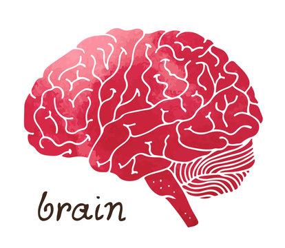 Human watercolor brain, hand drawn vector illustration