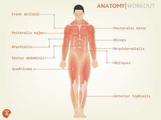 beautiful design of human anatomy front side with description