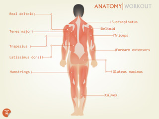 beautiful design of human anatomy back side with description