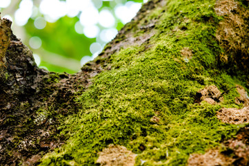 Bright green moss on tree, background is bokeh
