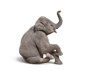 Deurstickers Olifant young baby elephant sit down to show isolated on white backgroun