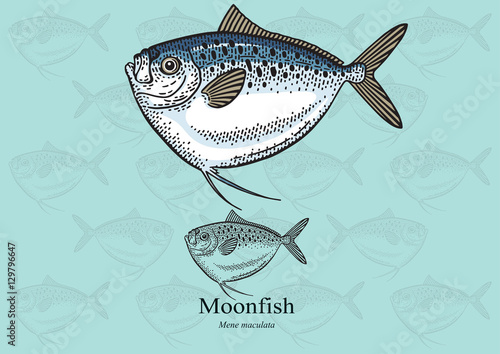 Moonfish vector illustration for artwork in small sizes for Opah fish price