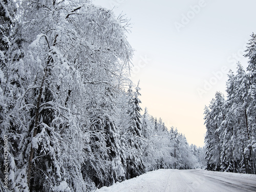 snowy fir trees forest - photo #41