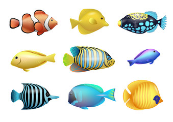 Set of drawings of bright exotic tropical fish from coral reefs. Vector graphics