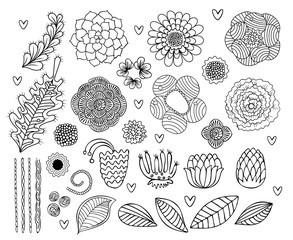 Vector hand drawn Flowers and leaves painted black line on a white background. Set of floral drawing lines design elements