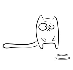 Funny hungry cat