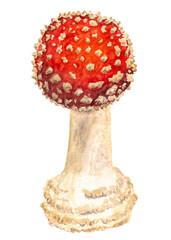 Death cup mushroom