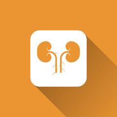 Kidney sign. icon design