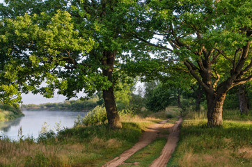 Two oaks and a dirt road on the river bank. A typical landscape of Central Russia.