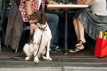 Low section of a couple sitting with dog at restaurant