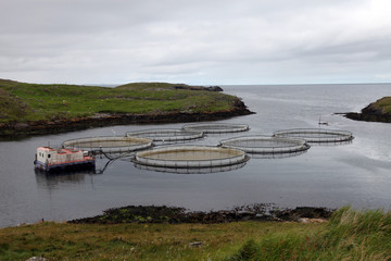 Salmon farm, Out Skerries, Shetland, Scotland, United Kingdom, Europe