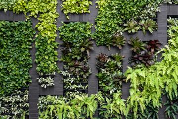 Green wall, eco friendly vertical garden  Wall mural