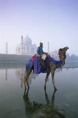 Camel and rider in front of Taj Mahal, Agra, Uttar Pradesh, India