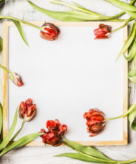 Red tulips frame on white chalkboard background , top view