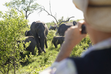 Rear view of a blurred man taking photograph of group of elephants