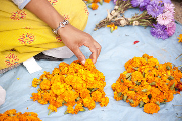 Flower seller with the heads of marigolds used by Buddhists as holy offerings at temples and shrines, Kathmandu, Nepal, Asia