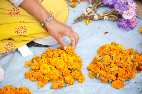 Flower seller with the heads of marigolds used by Buddhists as holy offerings at temples and shrines, Kathmandu, Nepal