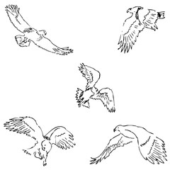 Eagles. Sketch pencil. Drawing by hand. Vector