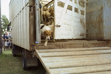 Hounds arriving by lorry at a dog show, England, United Kingdom, Europe