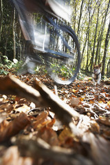 Blurred motion of dog chasing man on mountain bike through forest