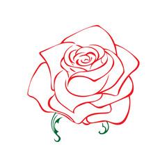 Rose sketch. Flower design element. Vector illustration. Elegant floral outline design. Red symbol isolated on white background. Abstract rose. Good for design, logo or decoration