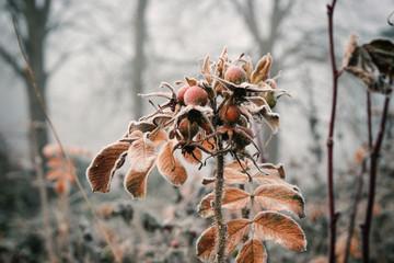 Winterlandschaft, Eisblumen
