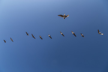 Flying Seagulls in a Line
