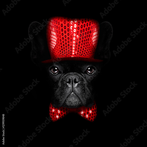 New years eve dog on black backgroud quot stock photo and royalty free