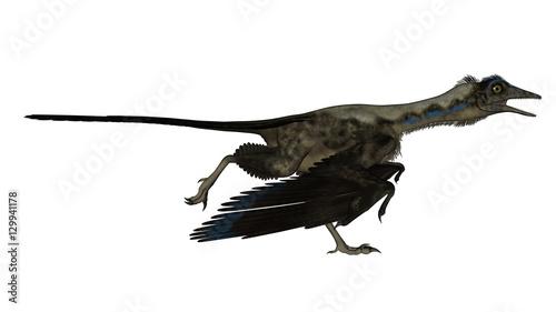 Archaeopteryx bird dinosaur running - 3D render
