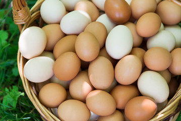 Wicker basket with eggs is standing on grass
