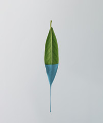 Green leaf with dripping blue paint on bright background. Minima