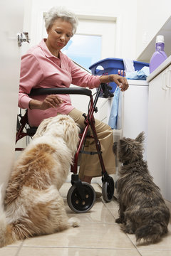 An African American woman sitting on wheel chair with pet dogs in bathroom while washing clothes